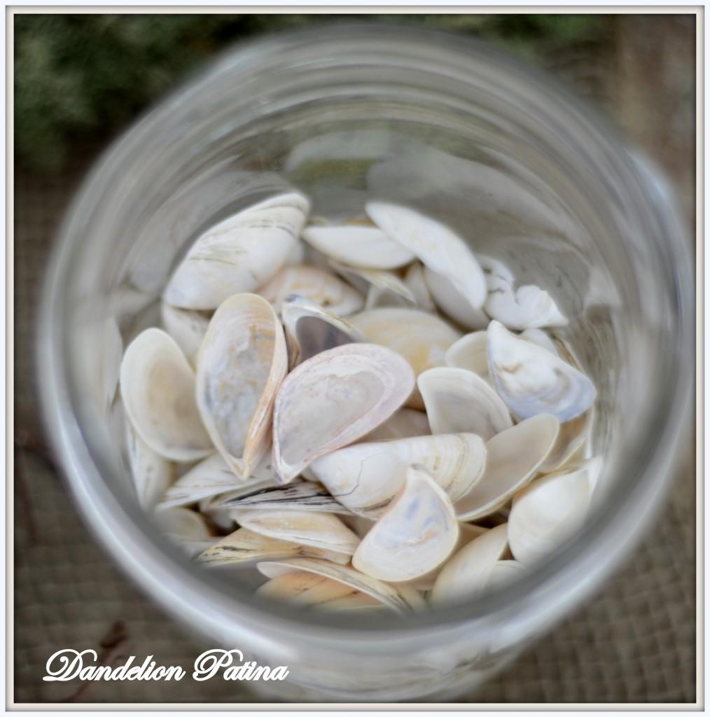 zebra mussel shells
