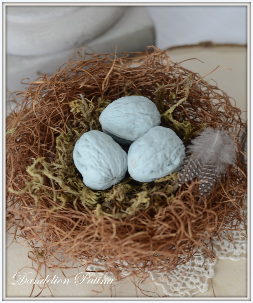 walnut eggs in nest