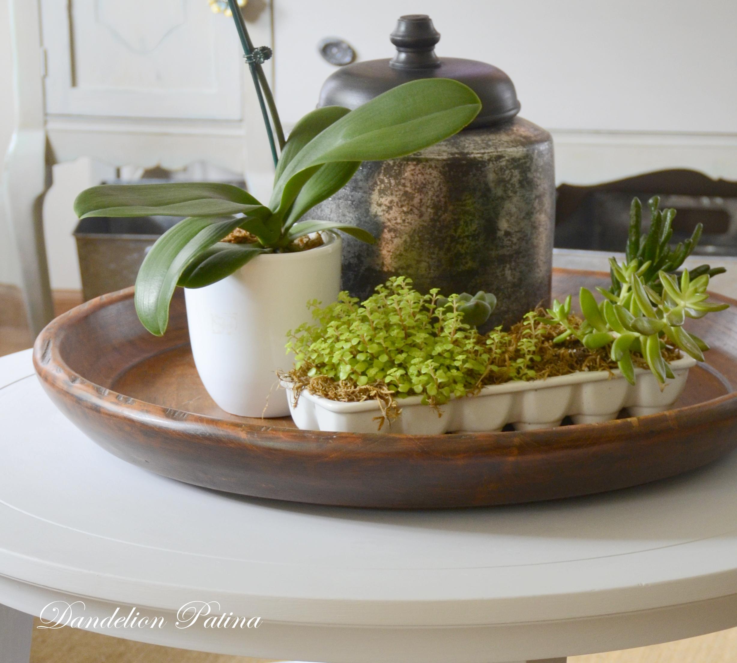 succulent vignette by dandelion patina
