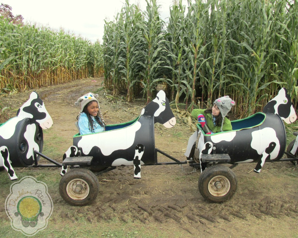 cow style hayride