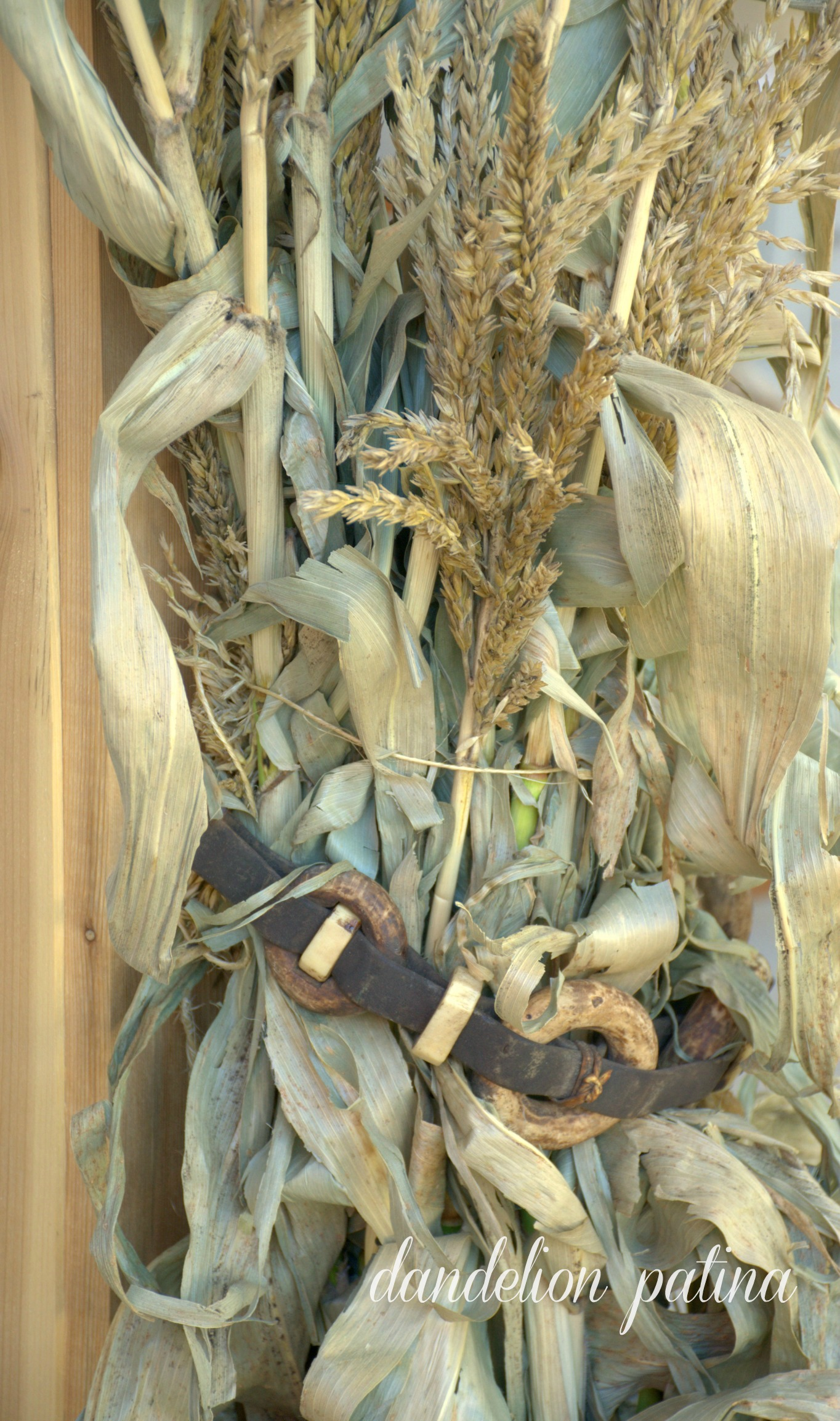 corn stalks with horse reins