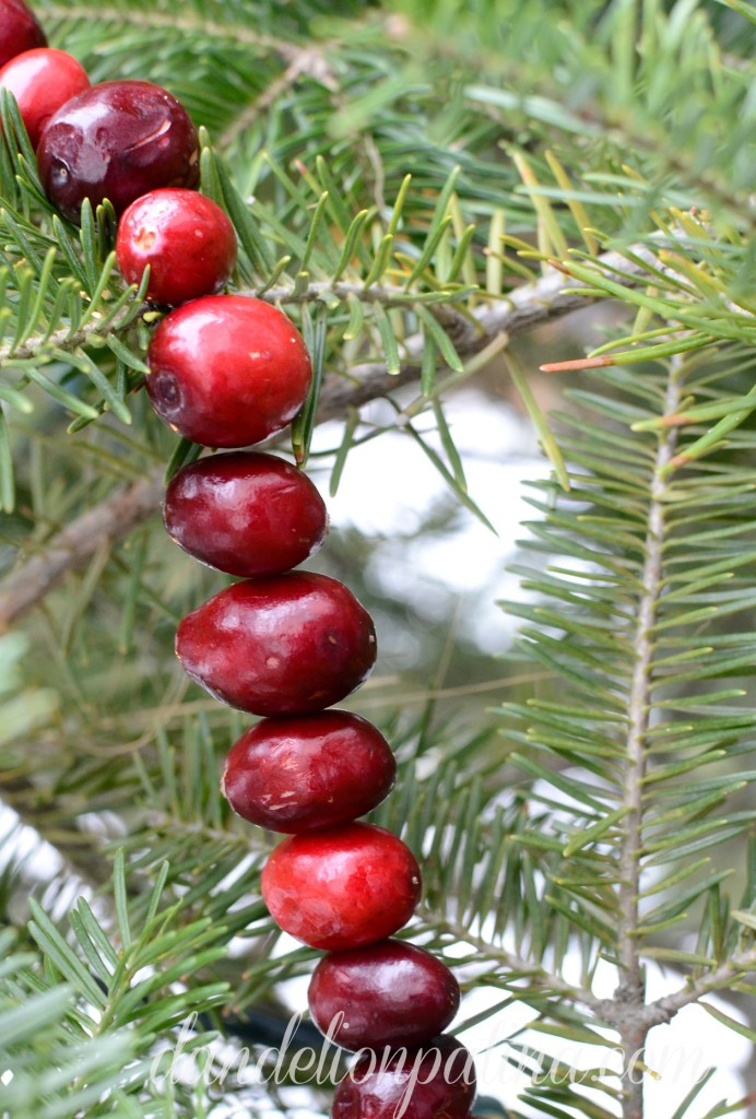 cranberry garland for the birds