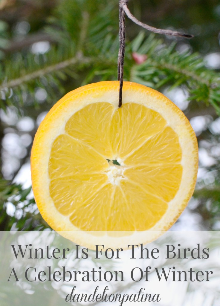 daily dose of Vitamin C winter is for the birds