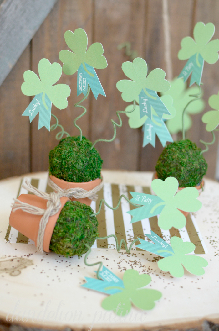 potted shamrock topiaries