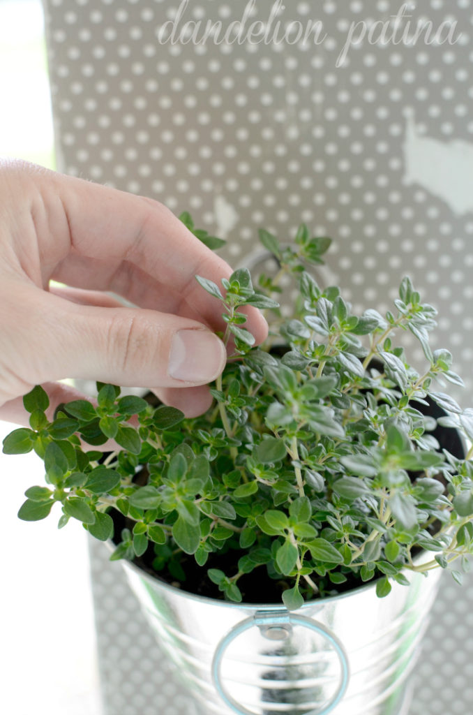 Create your own DIY hanging herb garden by dandelion patina with just a few simple supplies and some creativity