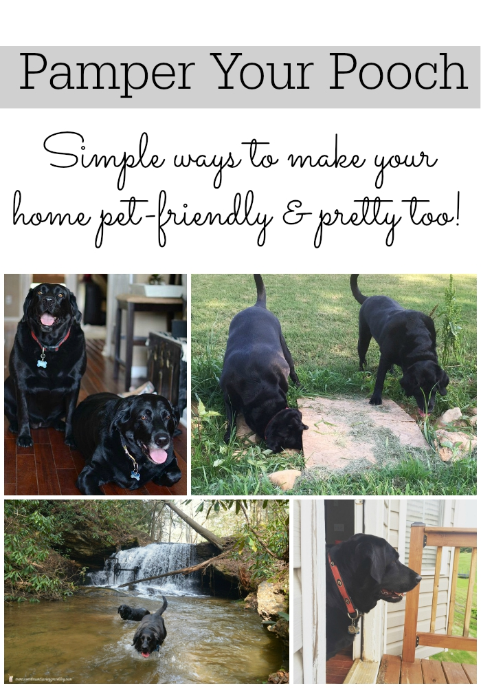 Pamper Your Pooch! Pet-friendly decorating and advice from my friend Kirsten at Sweet Tea & Saving Grace. Part of the Pampered Pets Feature via dandelionpatina.com