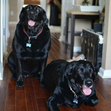 Pampered Pets Feature Savannah and Dakota from Sweet Tea & Saving Grace
