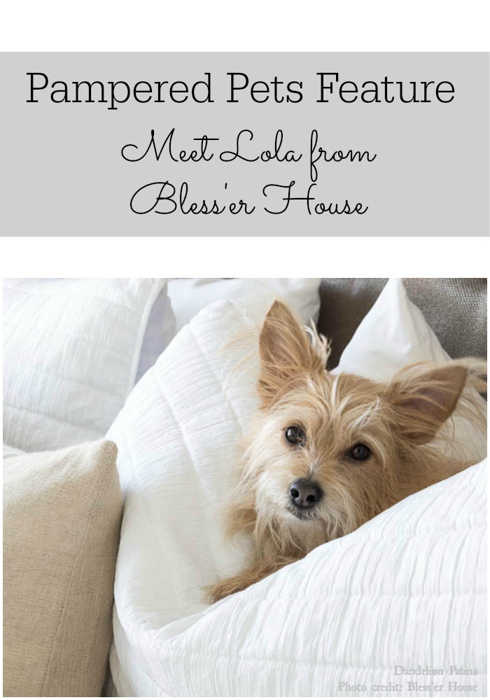 pampered pets feature meet Lola from Bless'er House via dandelionpatina.com