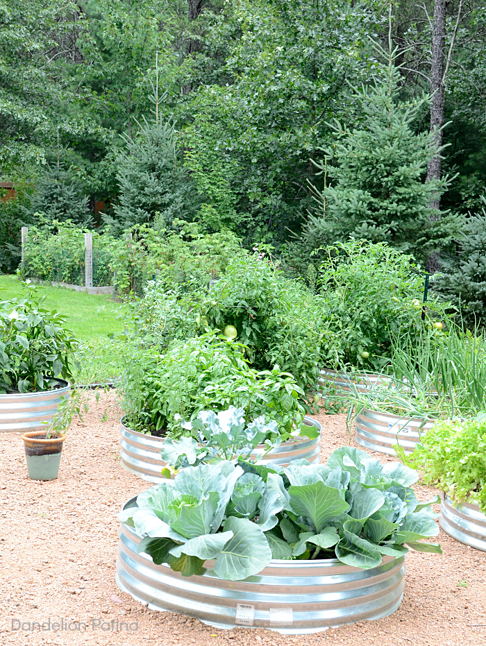 farmhouse style garden beds created with galvanized fire pit rings